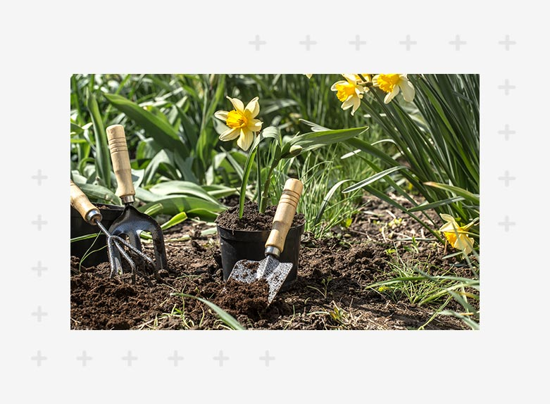 Horticultural services in Pune